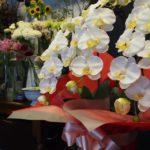 開業、開院御祝に人気のお花!光触媒の胡蝶蘭
