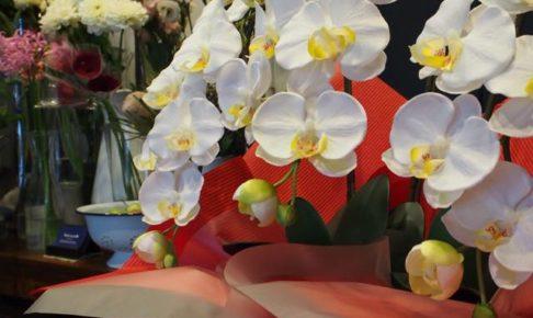 光触媒加工された造花